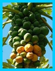 Les fruits, les légumes et plantes de Tahiti et ses îles