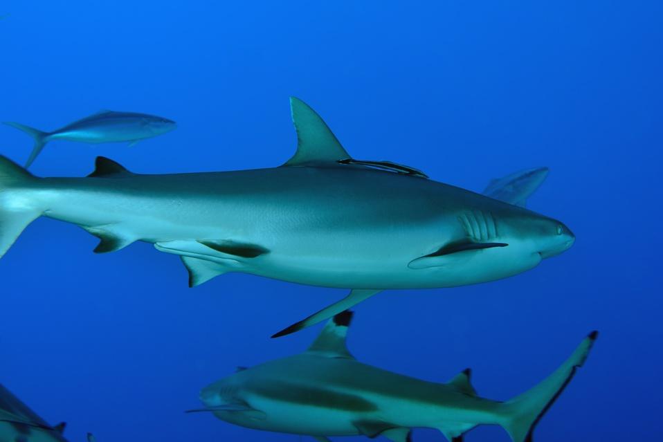 Suite de de la plongée sur le site de la vallée blanche, la vallée des requins