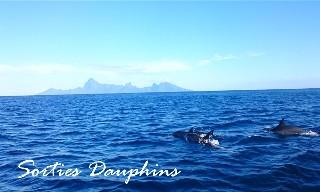 2017 - Offre hébergement + activité nautique sur Tahiti